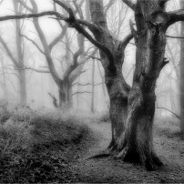 Highly Commended Misty Wood Malcolm Hodgetts