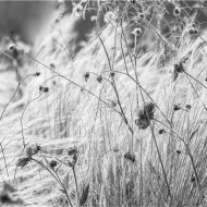 Commended A Summer Breeze (1 of 1) Dinah Jayes