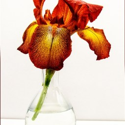 First Single Iris Sheila Ballantyne-Smith