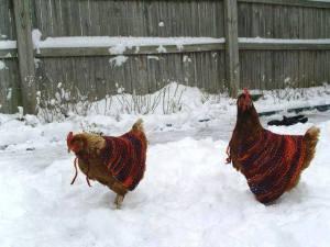 chicken scarves