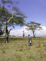 La giraffa a Crescent Island