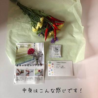 【BloomeeLIFE】ブルーミーライフの初回無料クーポンコード