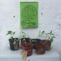 Amy's seedlings 2