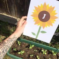 Jo's seedlings