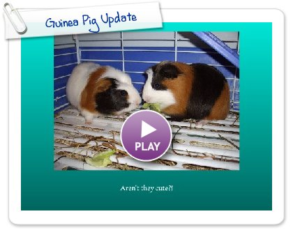 Click to play this Smilebox slideshow: Guinea Pig Update