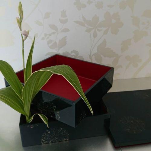 #重箱deいけばな をしてみました。家で咲いた紫蘭の白い花を一輪さしただけですが。Easy #flowerarrangement at home in Japanese Urushi box #松山継道 さんの #津軽塗り の重箱( #ななこ塗 )です。#青森県 #弘前市 #いけばな #ikebana #花のある生活#お花 #紫蘭 #茶花 #重箱