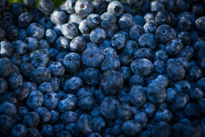 beautifully blue berries