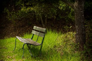 a quiet bench to sit under a tree