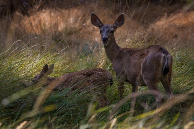 deer motherly love