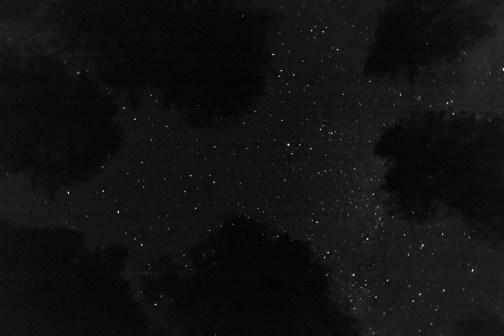 gazing through forest at starlight