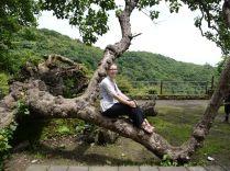 The tree and me/ Der Baum und ich
