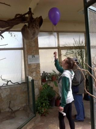 Visiting Debrecen zoo with my friend Lenka