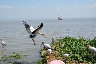 Watch storks