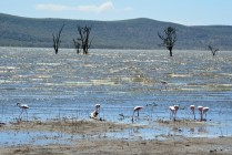 Lake Nakuru and flamingos