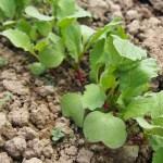 自然農とは?「有機農法」や「オーガニック」との違いは?
