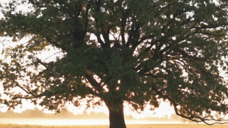 Disparar en Formato JPEG | Cómo ajustar tu cámara