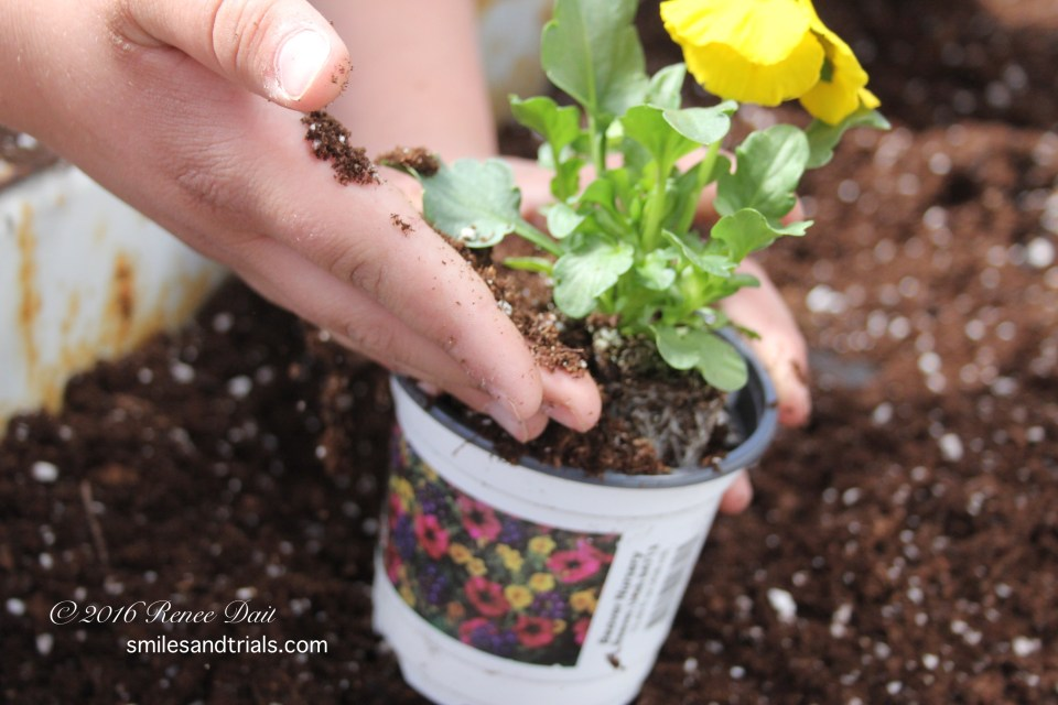 3396 planting