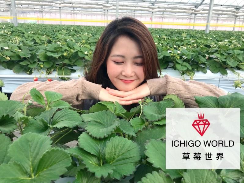 日本東北推薦景點-宮城縣ichigo world草莓世界