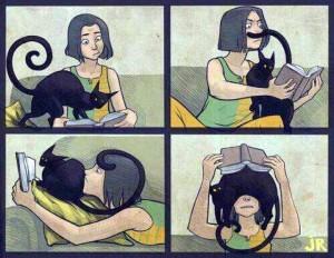 gatos e livros