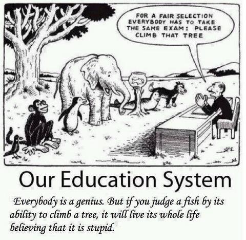 """""""Todos somos gênios. Mas se você julgar um peixe por sua habilidade em escalar uma árvore, ele passará a vida toda acreditando que é estúpido."""""""