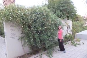 Les jasmins ici sont gigantesques