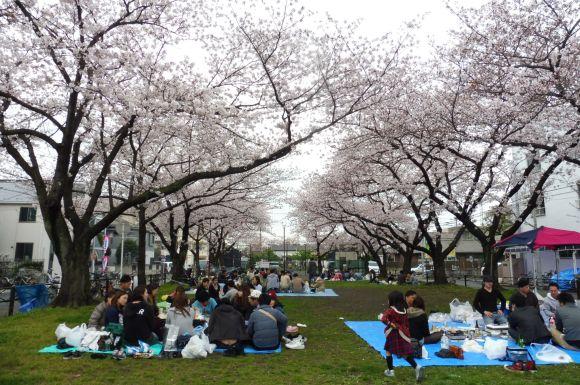 Et pendant ce temps-là à Kawasaki, hanami continue sous le moindre cerisiers qui traîne !