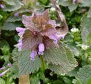 Macro flowers - sheer snobbery!