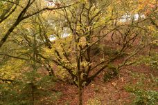 Great tree limbs above the Creekside Trail