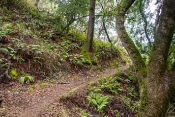 A Magical Hike - Indian Tree Open Space Preserve   Smiling in Sonoma