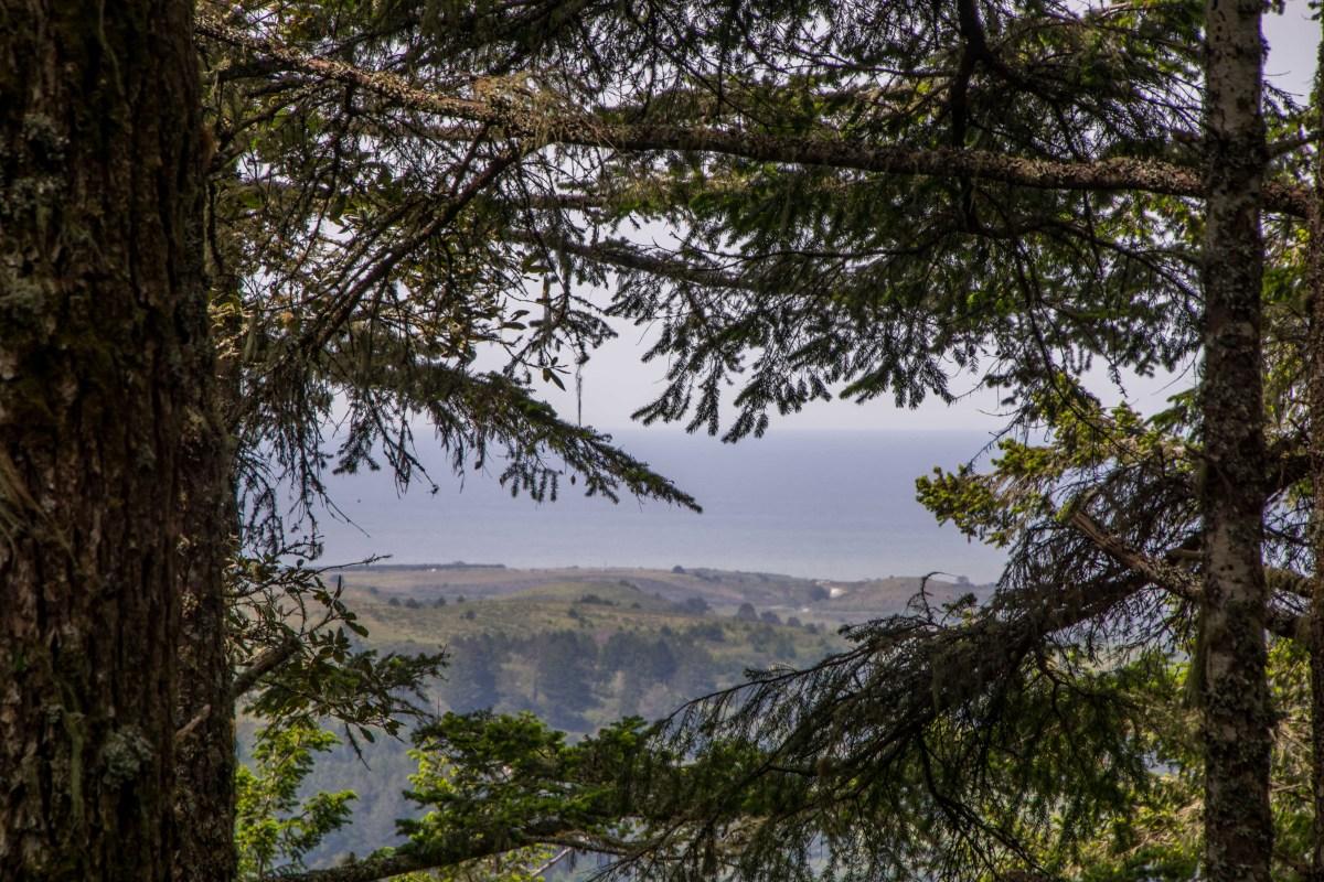 Butano State Park | Smiling in Sonoma