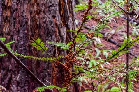 Redwood Regional - Ladybugs | Smiling in Sonoma