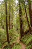 Portola Redwoods CA State Park - South Bay | Smiling in Sonoma