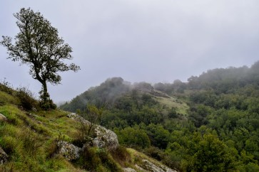 Hiking into the clouds - Skyline Wilderness Park Napa   Smiling in Sonoma