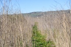 Part of mile #1 trail