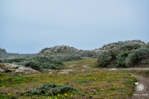 trail of wildflowers