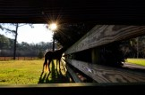 january-horses-146.jpg