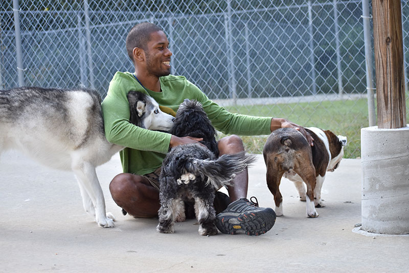 Three dogs playing at Smith Farms Kennels, the best for doggy daycare and long-term boarding in Metro Atlanta