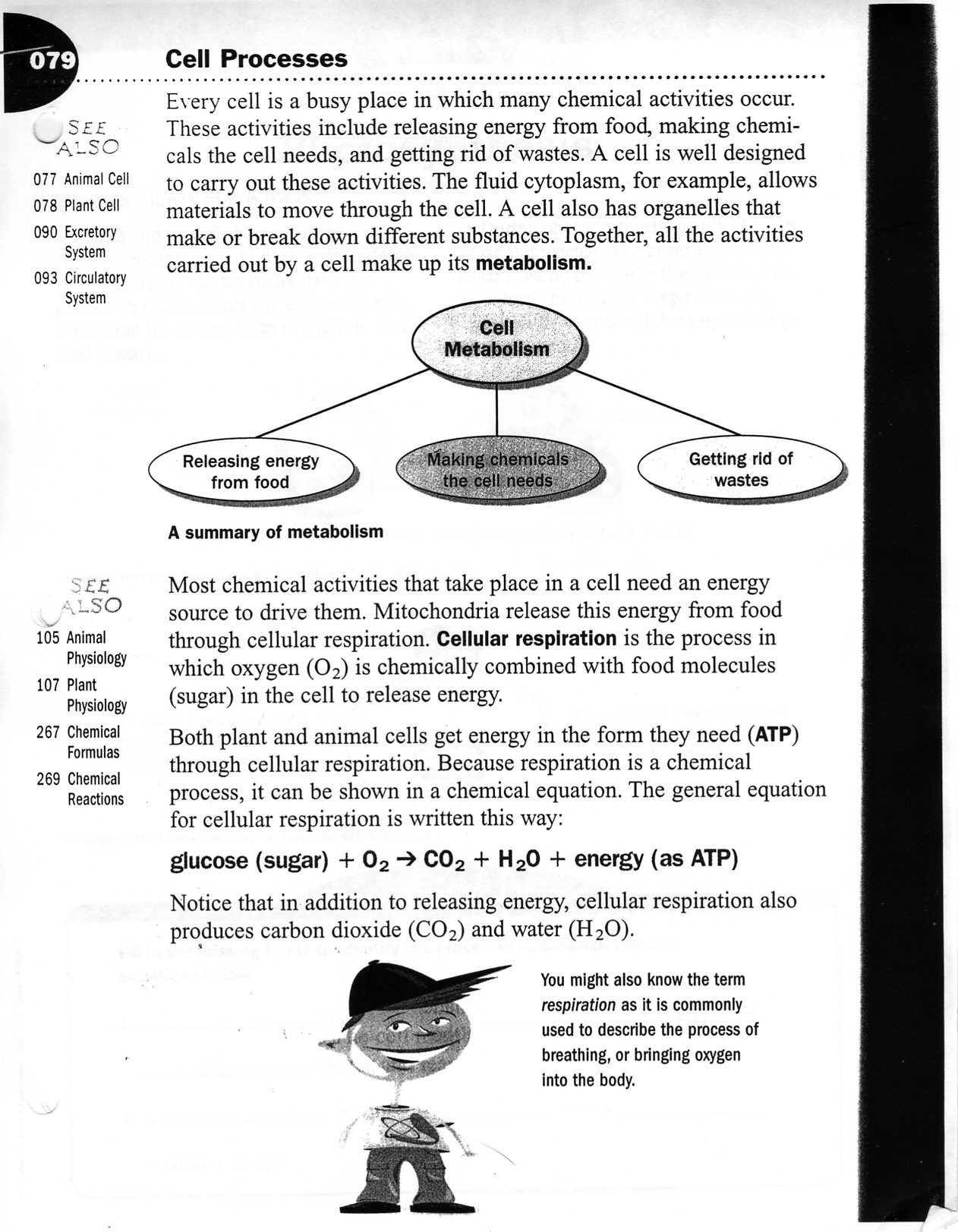 30 Active And Passive Transport Worksheet