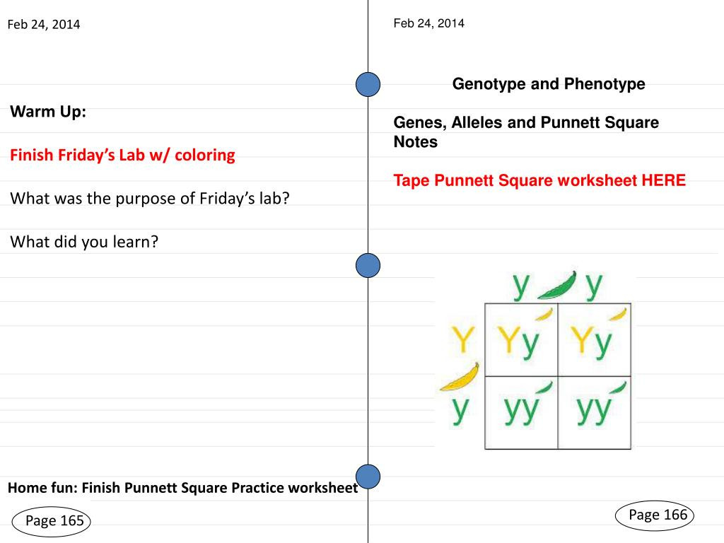 30 Plant Parts And Functions Worksheet