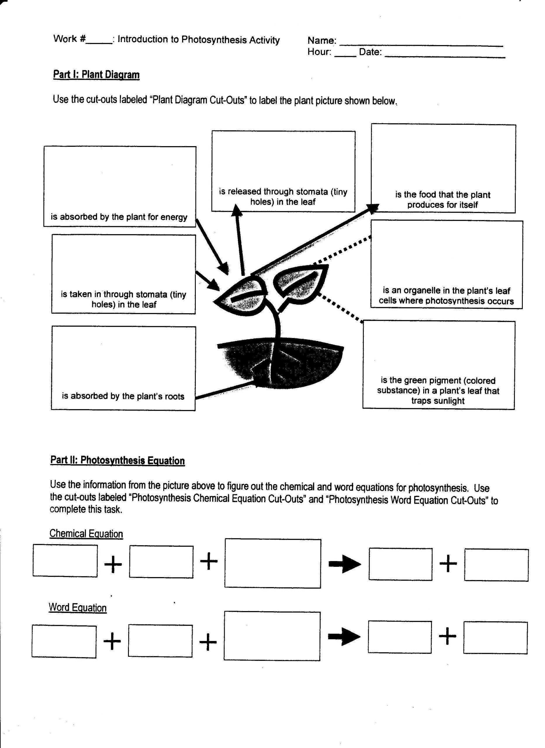 30 Bill Nye Respiration Worksheet