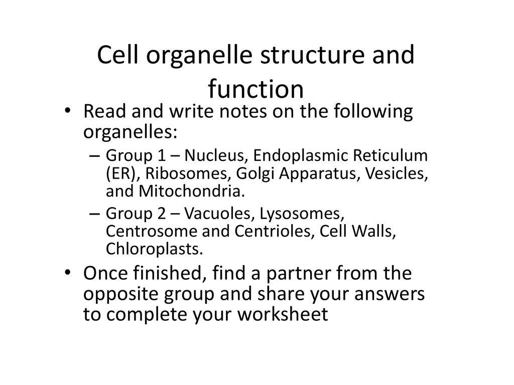 30 Cell Organelles Worksheet Answer Key