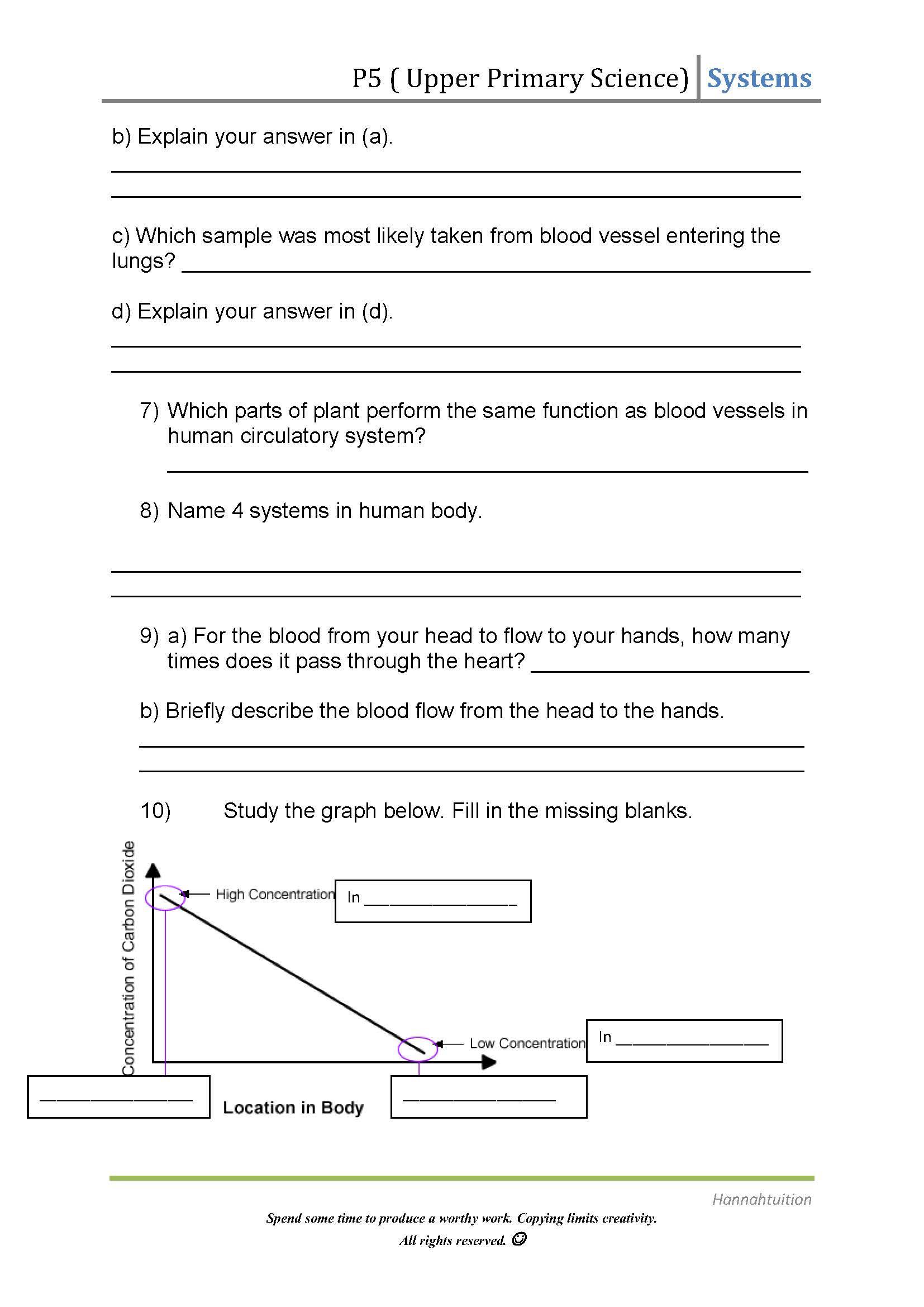 30 Circulatory System Worksheet Answers