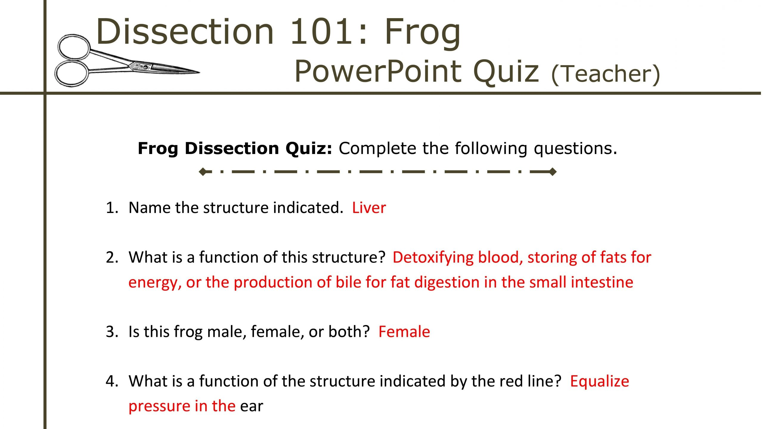 30 Frog Dissection Worksheet Answer Key
