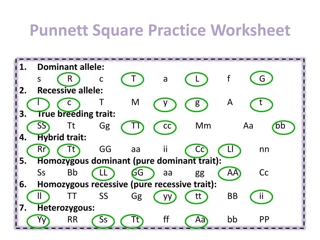 30 Punnett Square Practice Worksheet