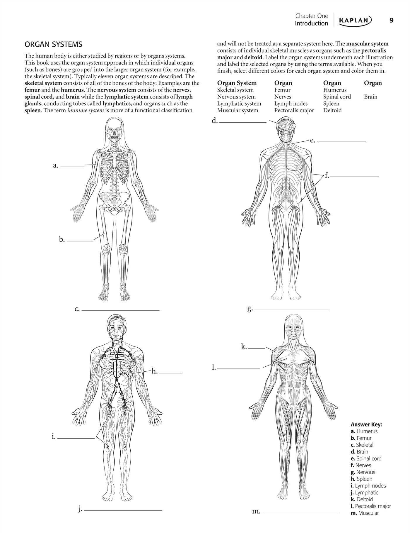30 The Respiratory System Worksheet