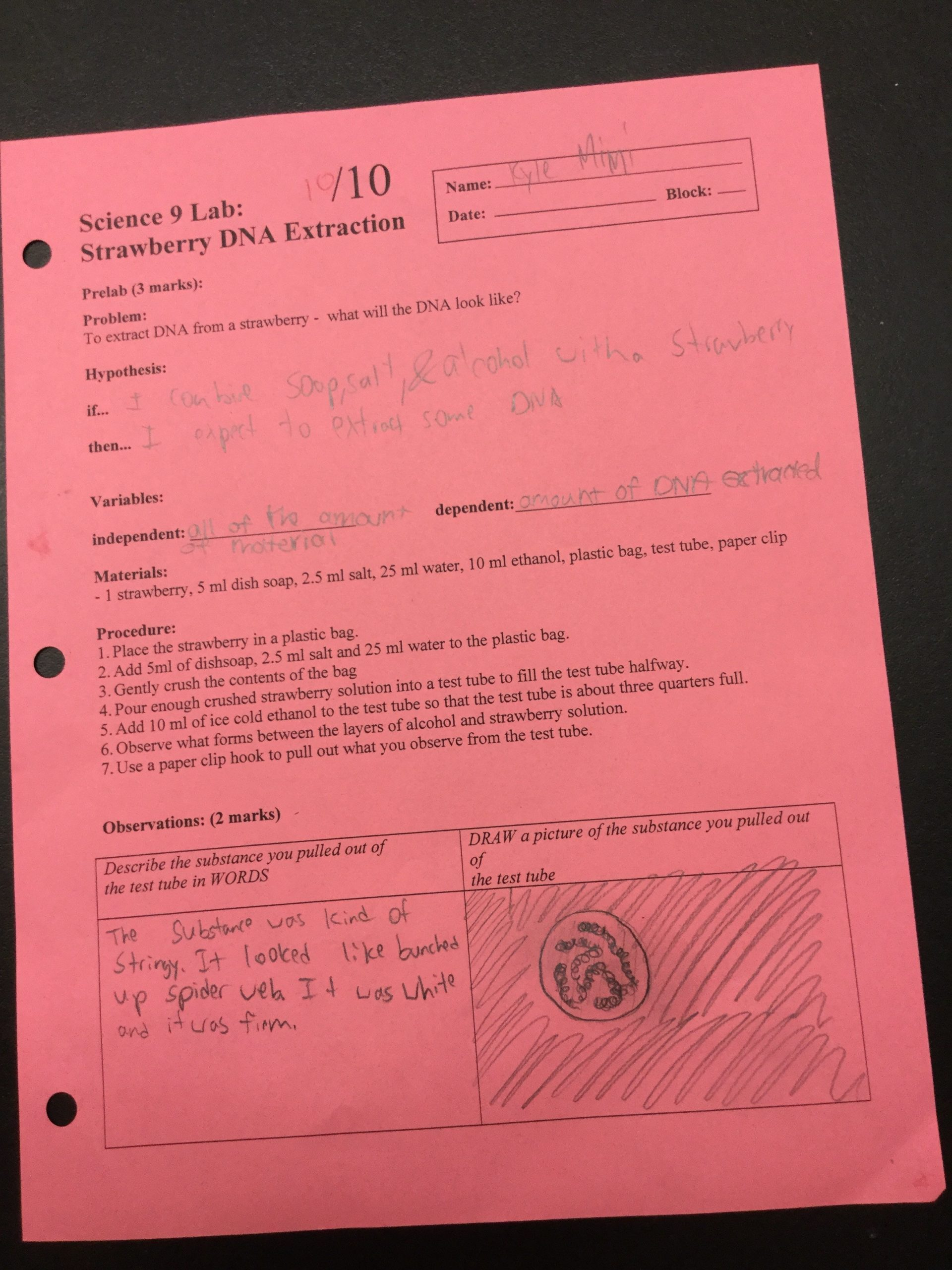 30 Strawberry Dna Extraction Lab Worksheet