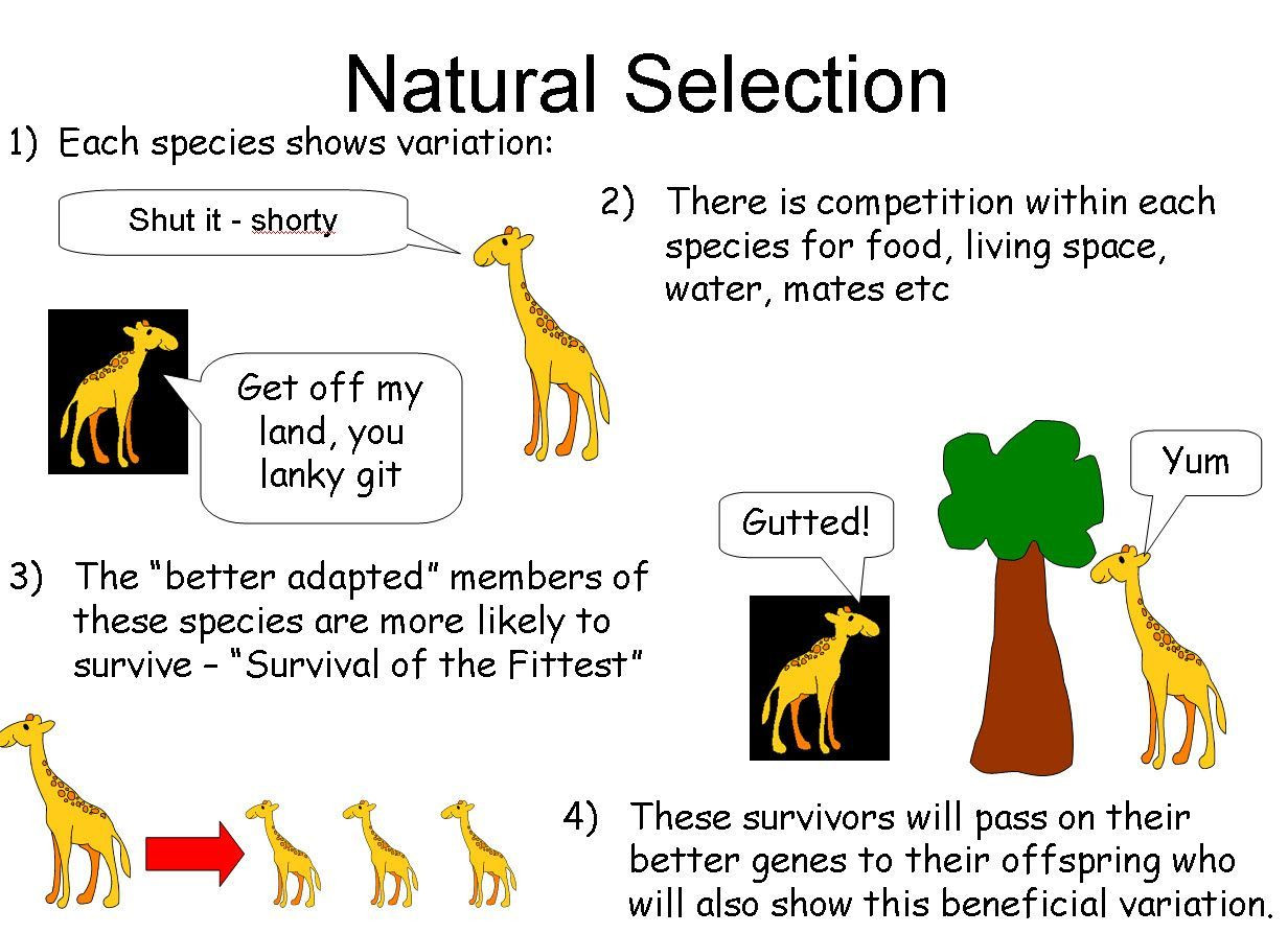 30 Types Of Natural Selection Worksheet