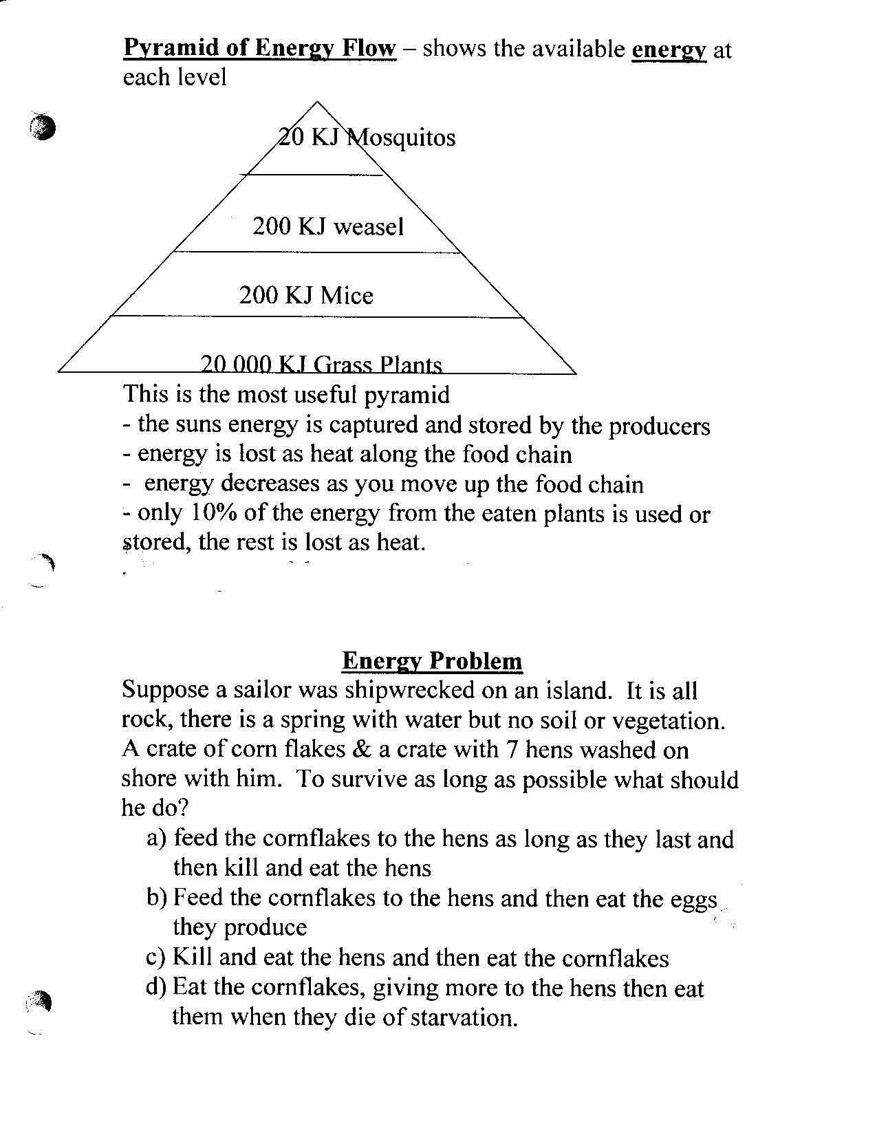 30 Bill Nye Food Web Worksheet