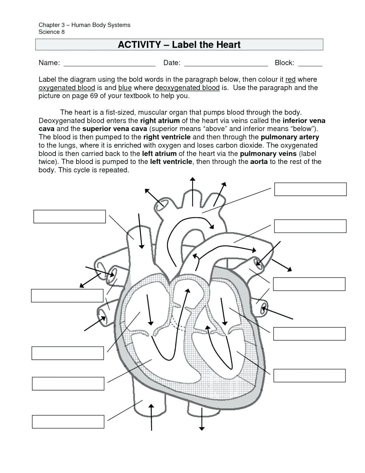 30 Cell Cycle Coloring Worksheet