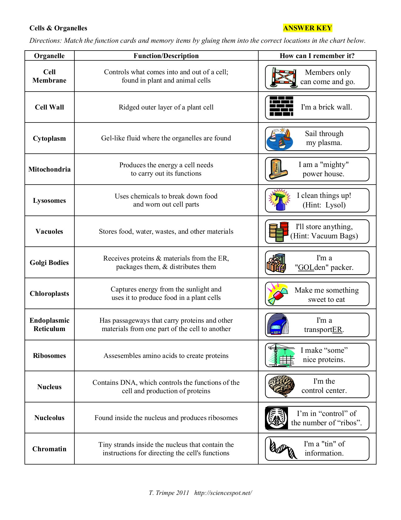 30 Cell Organelles Worksheet Answers